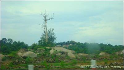 Sebatang pokok yang mati di dalam laluan perjalanan ke Segamat (Route Exit: Tampin)